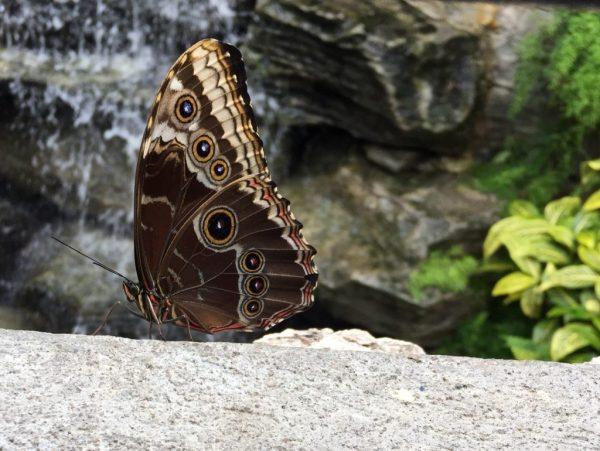 «Бабочки в свободном полете» в монреальском Ботаническом ...