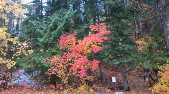 The low-angled October sun creates an electric red glow of vine maple (Acer circinatum) underneath the rich green of the conifers at the Twin Lakes trailhead.