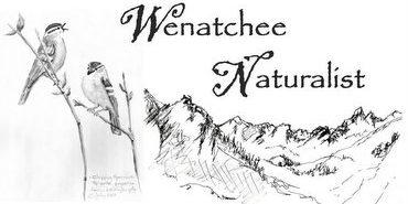 Wenatchee Naturalist