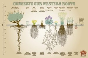 Save Our Western Roots postcard