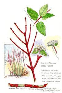 Wenatchee Naturalist Sample Journal Entry