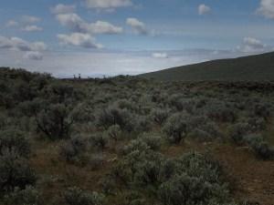 Mule deer on the horizon photo: Patrick Farrar