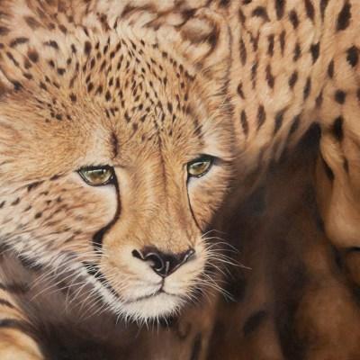AUREUS    Oil on Canvas, 1020mm x 760mm  more info