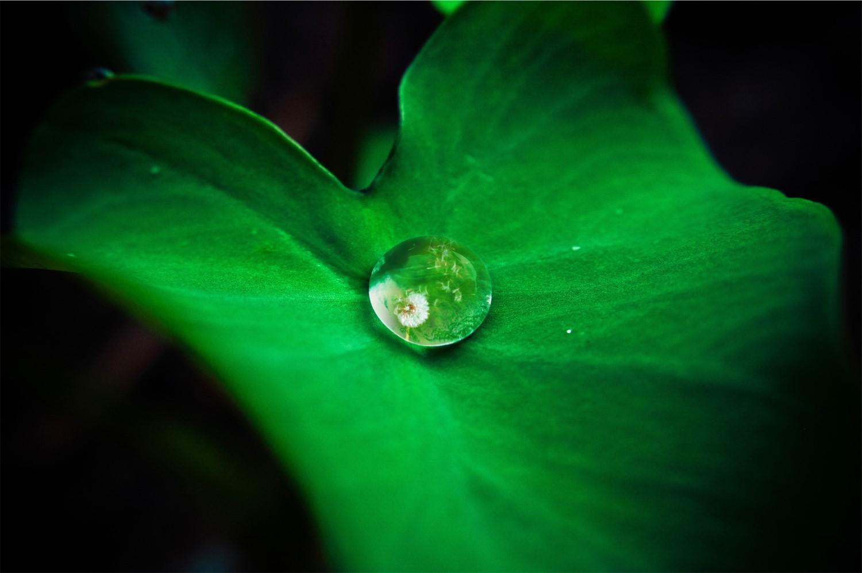Groen blad met waterdruppel