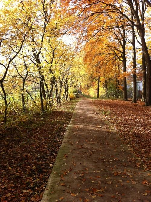 Herfstdip of genieten van de herfst