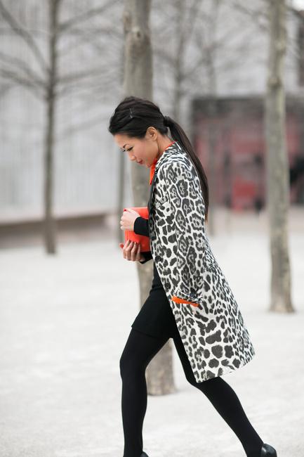 Snow Leopard-4