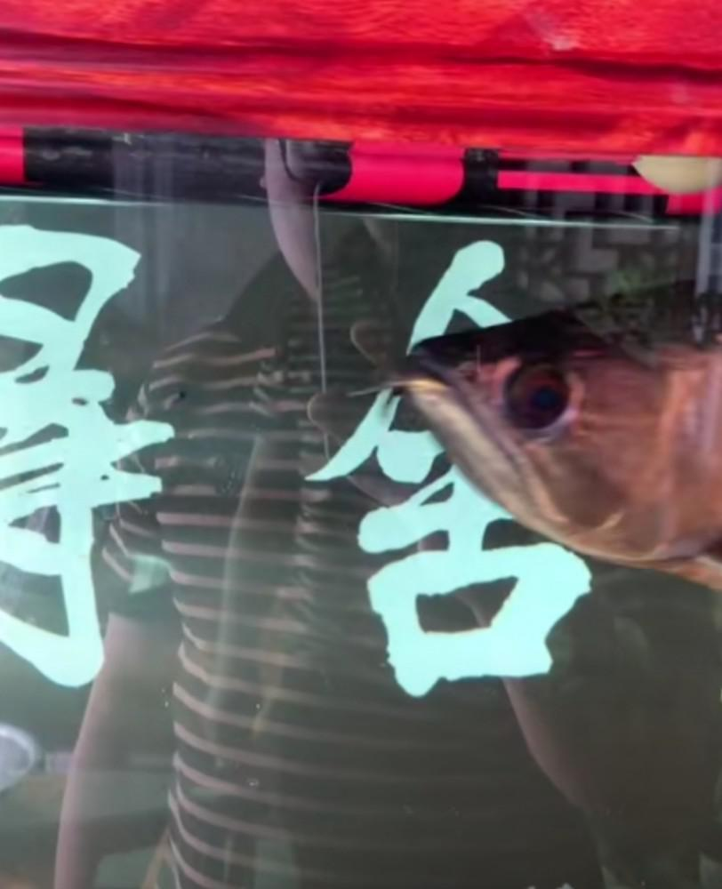 男子封城期间炖鱼缸里三千元金龙鱼:家里没存货了