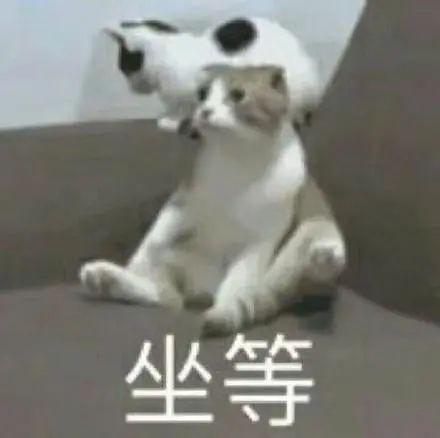 上海男子自学驾驶技术深夜偷盗千万元游艇 只为出海看日出