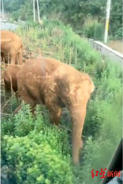 渣土车司机讲述围堵大象惊魂:脸对脸足足10秒