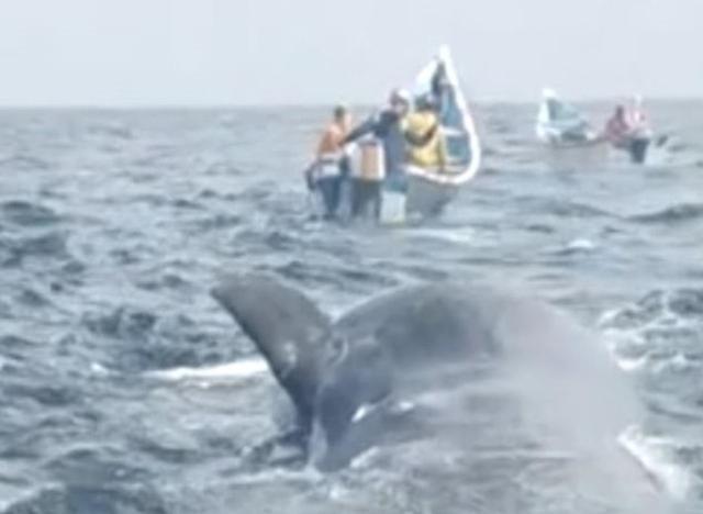 """贫苦渔民在鲸鱼尸体中发现""""龙涎香"""",价值近千万"""