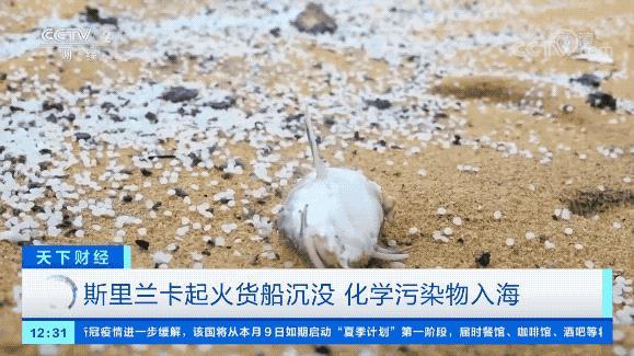 史上最严重海洋灾难:81柜危险品 动物尸体不断涌出…