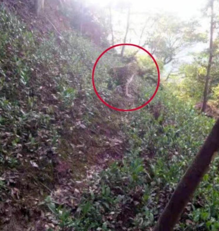 杭州山上发现豹子?目击村民与其对视
