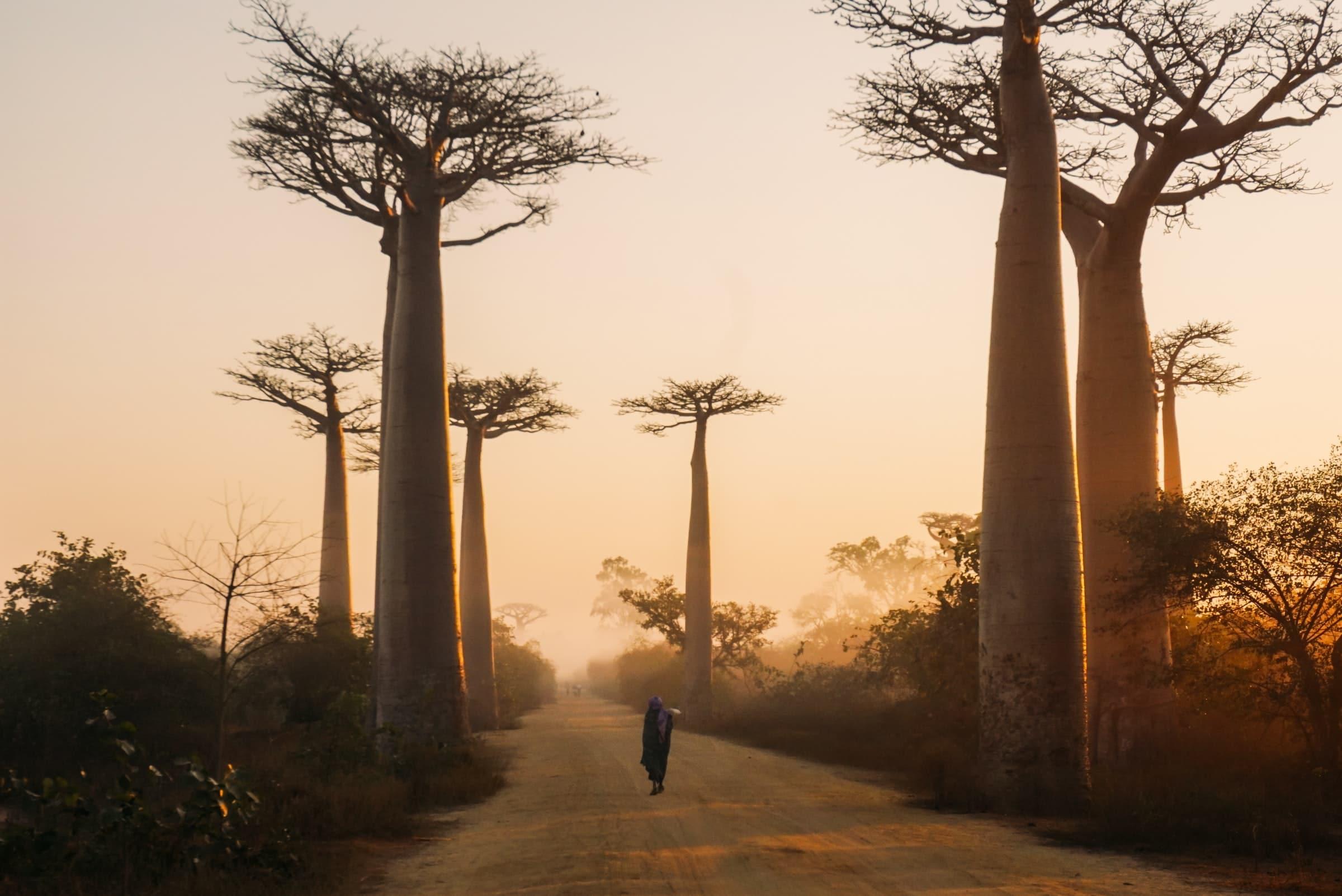 Rondreis Madagaskar | 6x must sees voor een onvergetelijke reis via @wereldreizigersnl