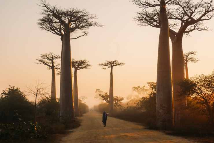 baobab-madagaskar-rondreis