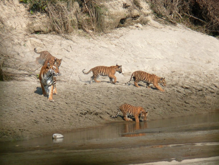 Bardiya National Park, Nepal