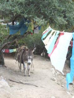 tibet37