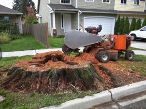 monroe-wa-stump-removal-stump-grinding-09