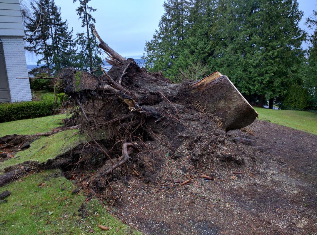 Stump Removal in Everett Washington