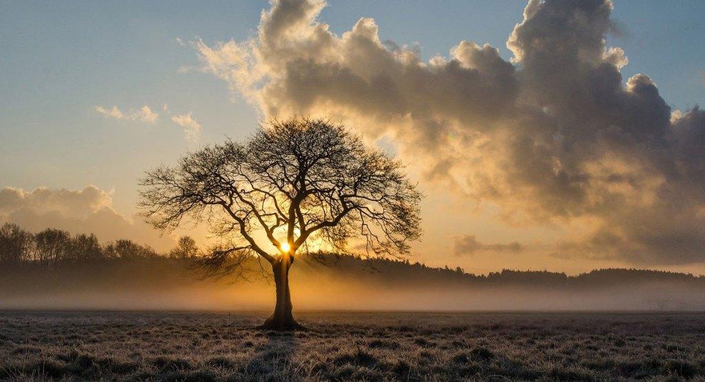 quercia più vecchia mondo aspromonte