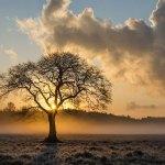 In Aspromonte la quercia di 943 anni, è la più vecchia al mondo