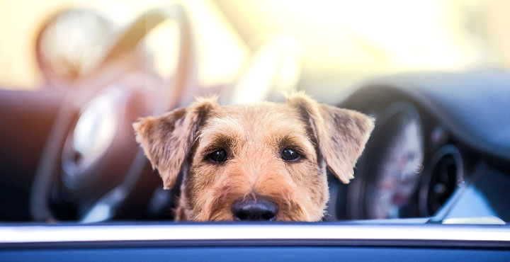 Hund im Auto bei starkem Sonnenschein