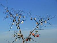 Tassenbaum