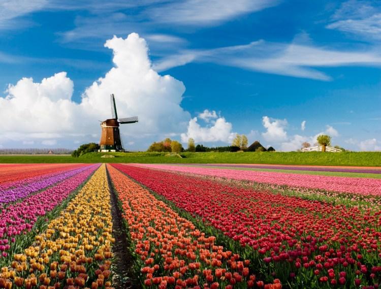 WDH Werving en Selectie Recruitment Bureau voor Aalsmeer Aalsmeerderbrug rijsenhout Hoofddorp en Schiphol