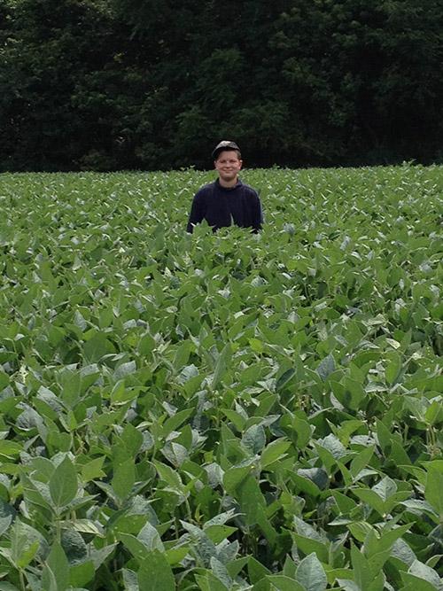 Soybean Field Growth