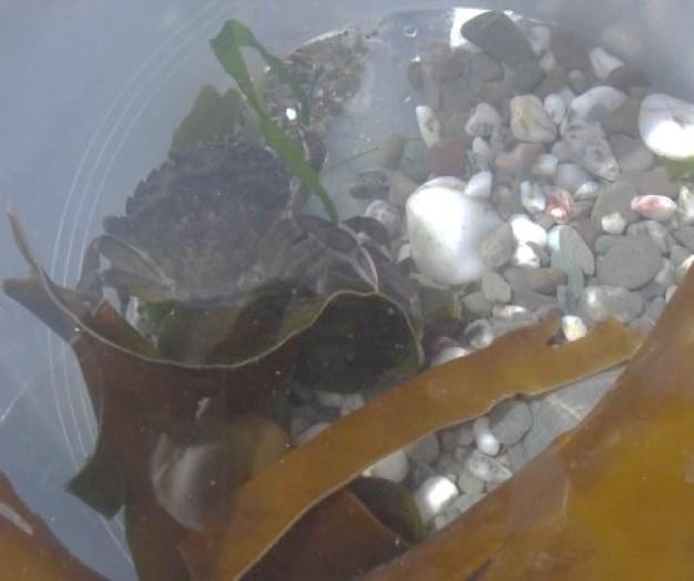 Careful Crabbing in West Bay