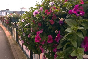 Westbourne in Bloom