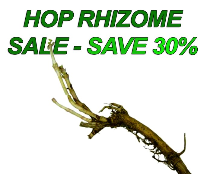 MoreBeer hop rhizome sale - Save 30% on Hop Plants
