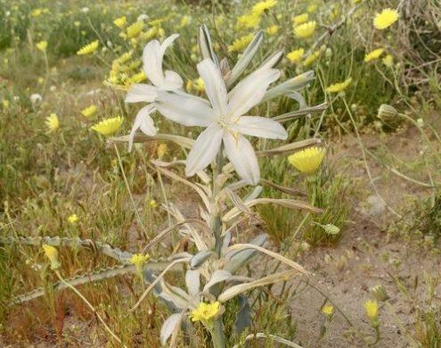 A Desert in Full Bloom