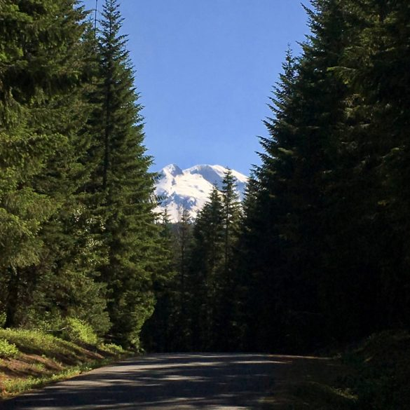 PCT: Reflections On My First Week