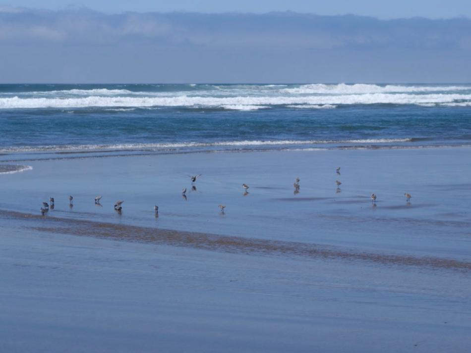 Small seabirds running along sand
