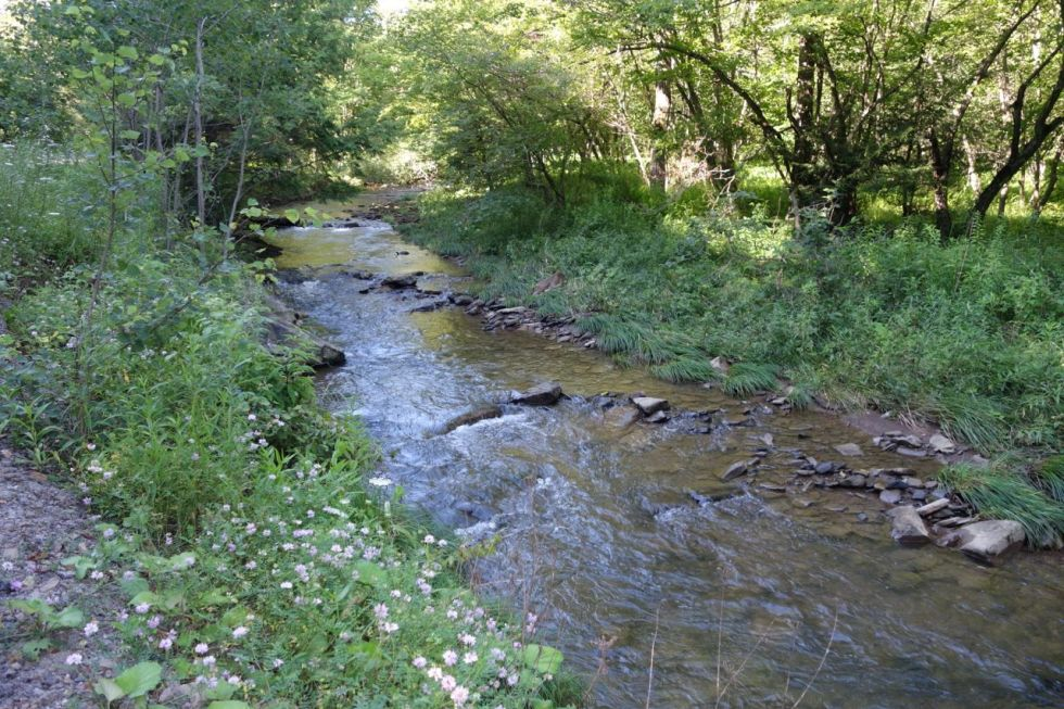 photo of west creek media's namesake, image by kay's moment in time, llc