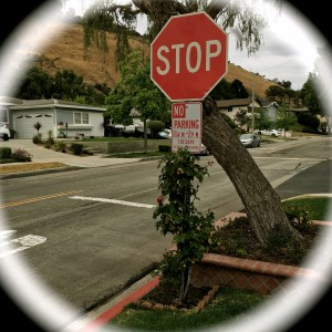 "When ""stop"" and ""no"" must be wreathed in roses..."