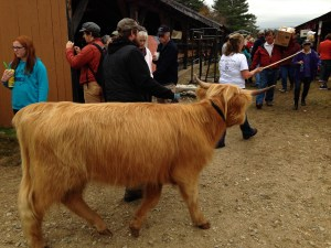 Andy and I got out of this cow's way in a hurry. Other fairgoers were more nonchalant.