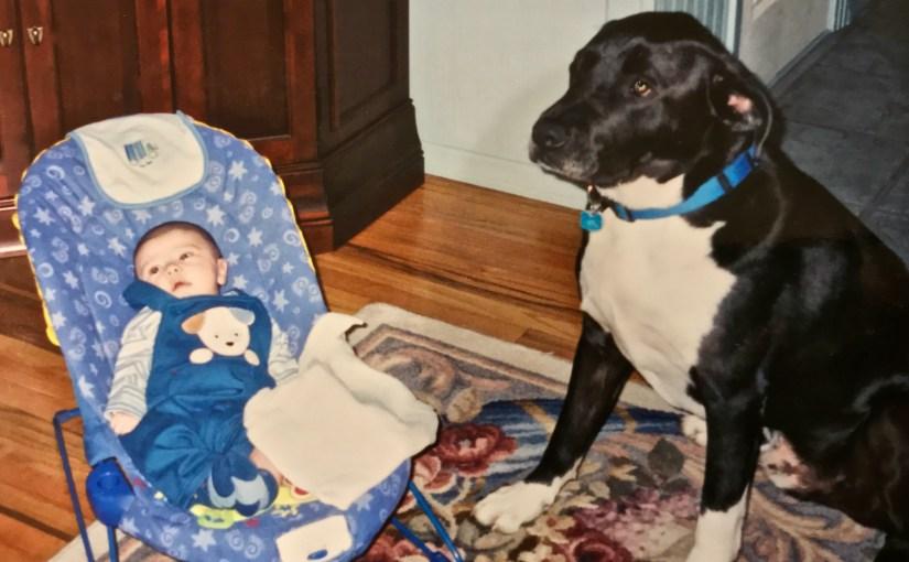 When Baby Met Dogs (#261)