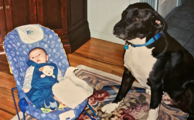 When Baby Met Dogs (#261)