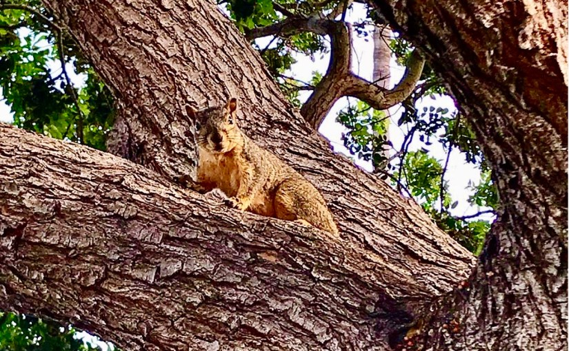 One Smug Squirrel (#286)