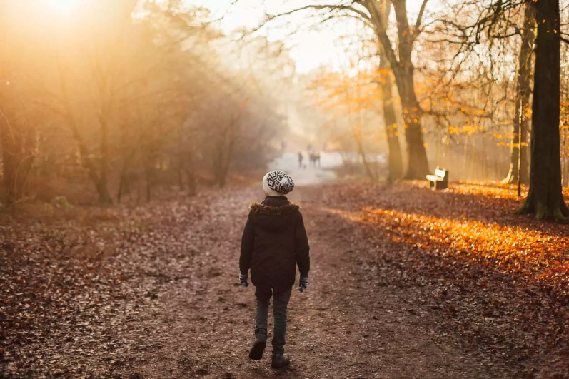 Boy walking through a sun drenched forest
