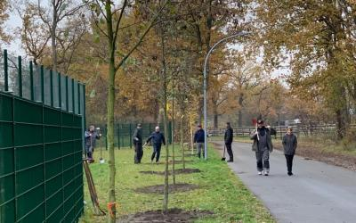 Neue Bäume für den Ballpark – Baumpaten gefunden