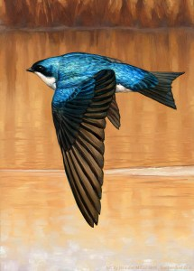 "Jennifer Miller ""Restless Tree Swallow"" 7x5 oil $375."