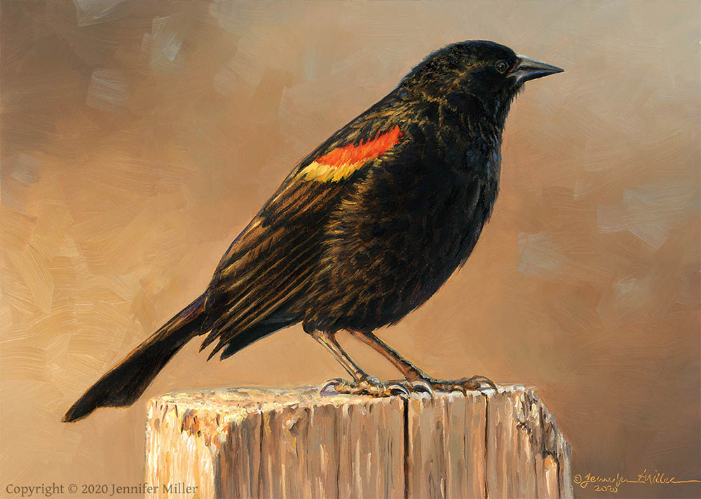 "Jennifer Miller ""Frosty Morning"" (Red-Winged Blackbird) 5x7 oil $375. SOLD"