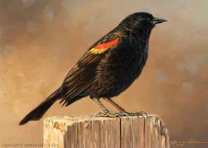 "Jennifer Miller ""Frosty Morning"" (Red-Winged Blackbird) 5x7 oil $375."