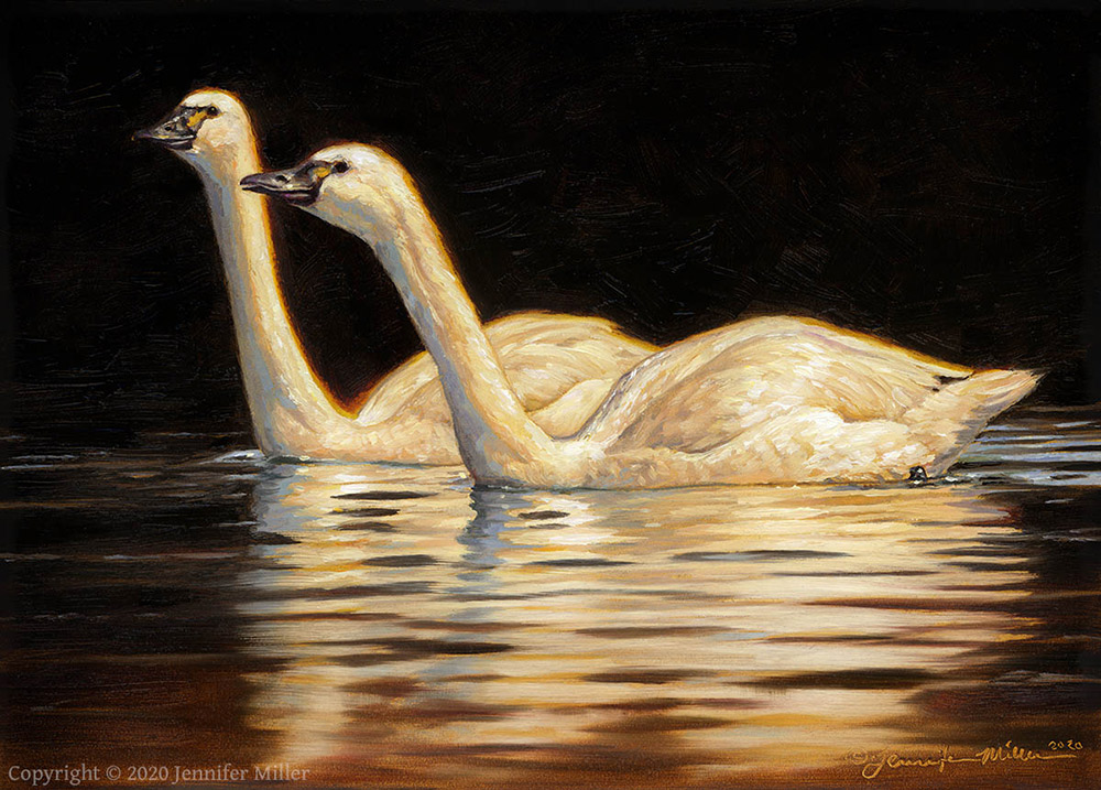 "Jennifer Miller ""Two Lights on a Dark Water"" (Tundra Swans) 5x7 oil $375. SOLD"