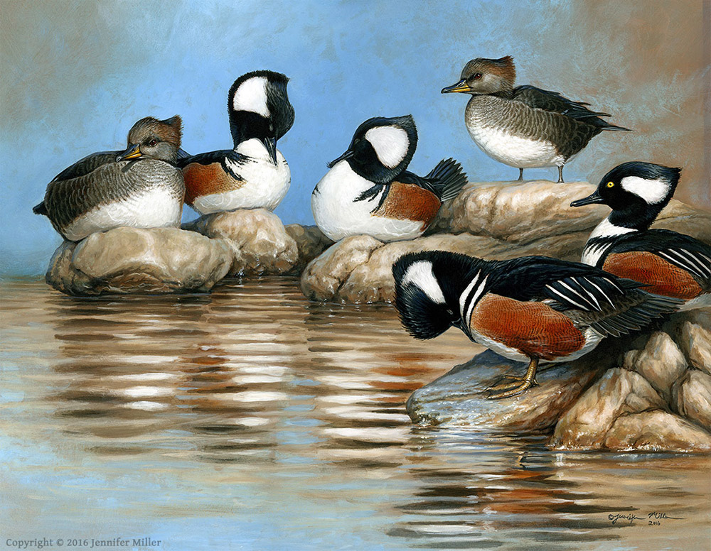 "Jennifer Miller ""Preening Mergansers"" (Hooded Mergansers) 14x18 acrylic $1,500. SOLD"