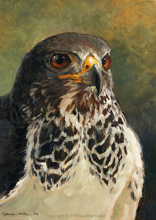 "Jennifer Miller ""Swainsons Hawk"" 7x5 oil $350. SOLD"