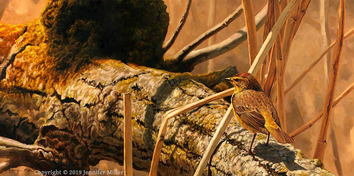 "Jennifer Miller ""The Cottonwood Path"" (Palm Warbler) 12x24 oil $2,800. SOLD"