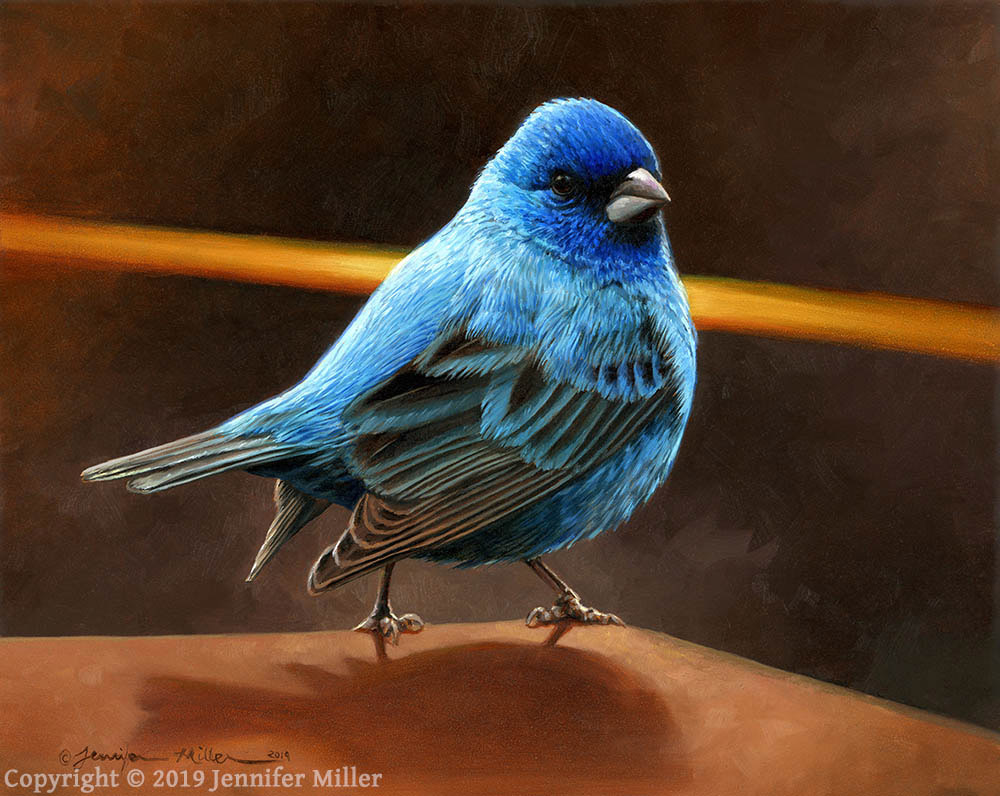 """Jennifer Miller """"There He Is!"""" (Indigo Bunting) 8x10 oil $850."""